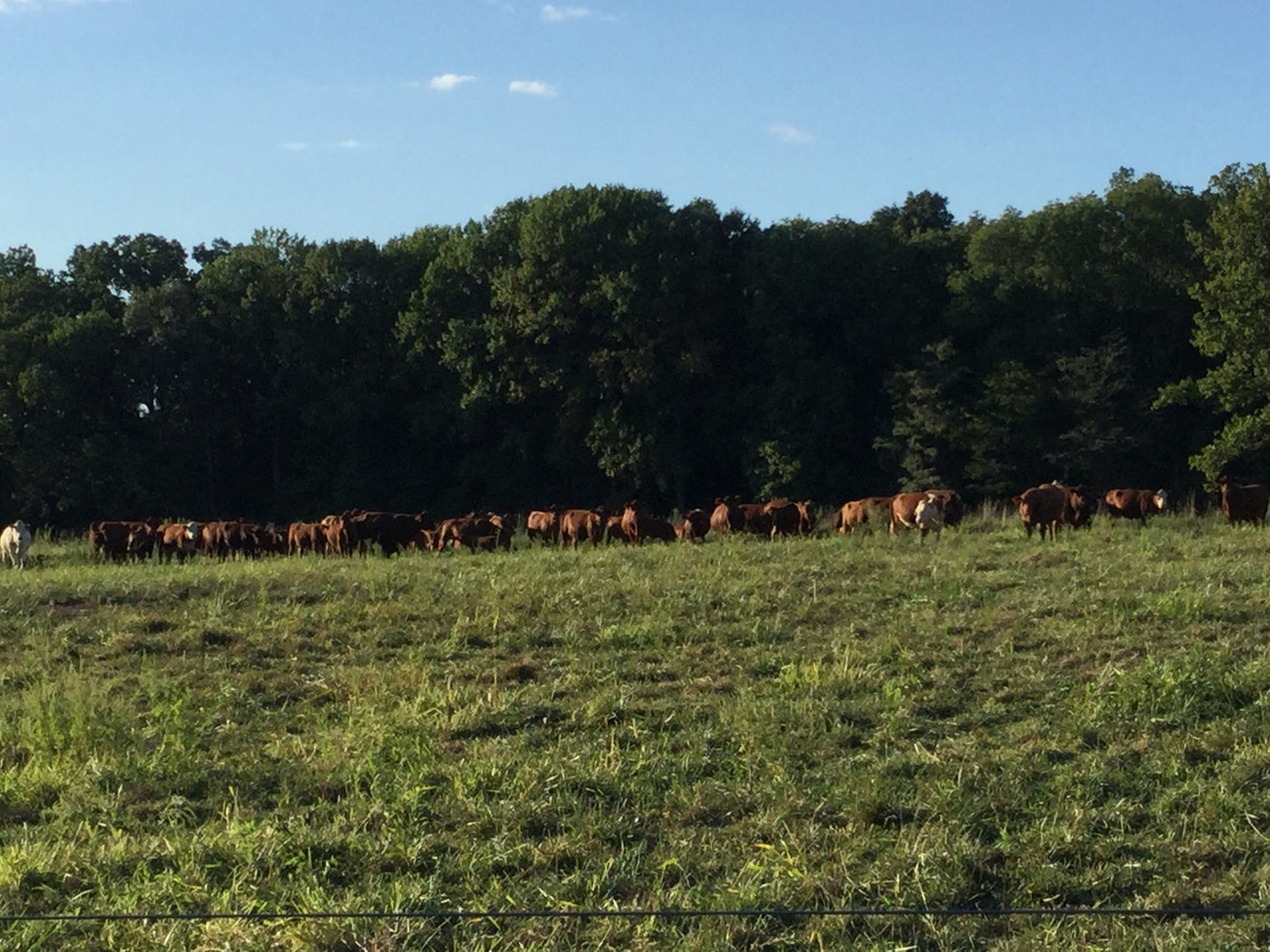Pastures Of Providence Organic Beef