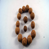 5 eyes authentic buddhist buddha chitta seed fair trade cheap price handmade seeds made in Nepal