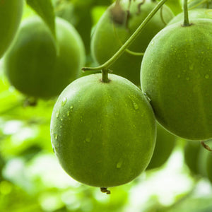 Monk Fruit: The Keto King Of Sweet