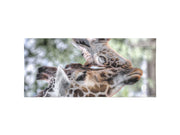 Giraffe Love Beach Towel