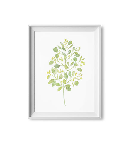 Seeded Eucalyptus Watercolor Print