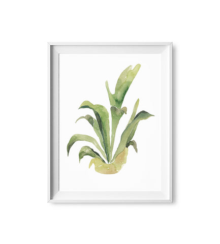 Staghorn Fern Watercolor Print