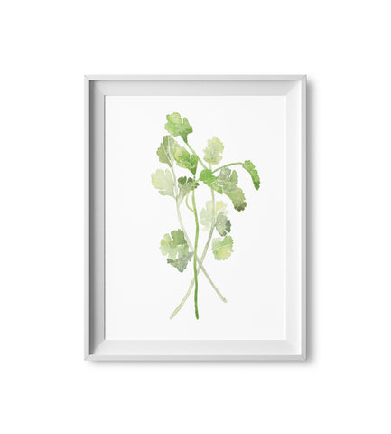 Cilantro Herb Watercolor Print