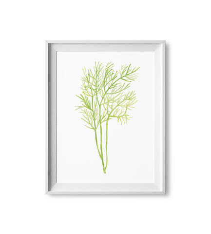 Dill Herb Watercolor Print
