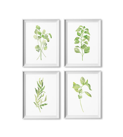 Cilantro, Oregano, Terragon & Basil Watercolor Prints: Four Pack