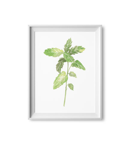 Mint Herb Watercolor Print