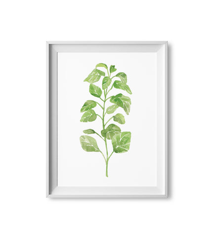 Oregano Herb Watercolor Print