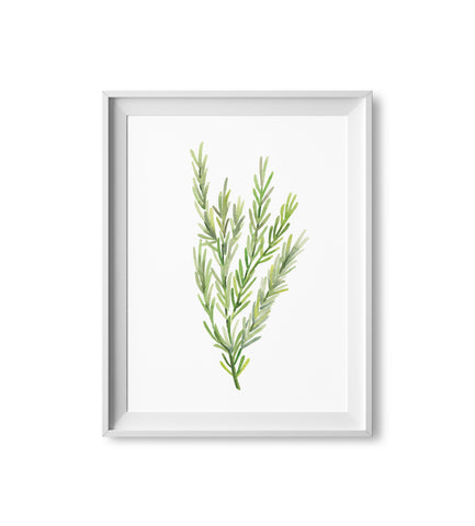 Rosemary Herb Watercolor Print