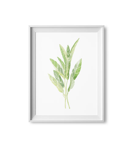 Sage Herb Watercolor Print
