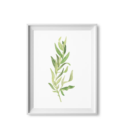Terragon Herb Watercolor Print