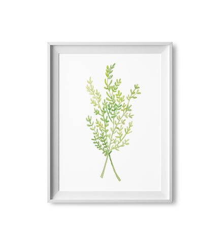 Thyme Herb Watercolor Print
