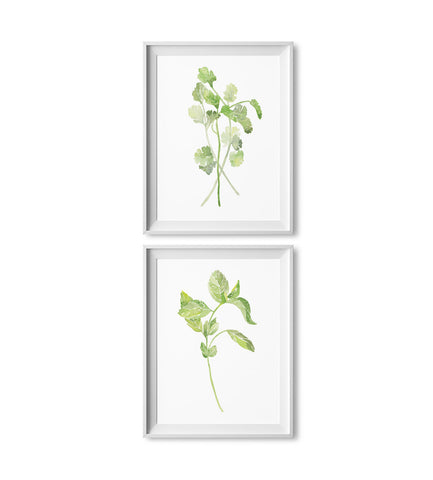 Cilantro & Basil Watercolor Herb Prints: Two Pack