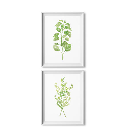 Oregano & Thyme Watercolor Herb Prints: Two Pack