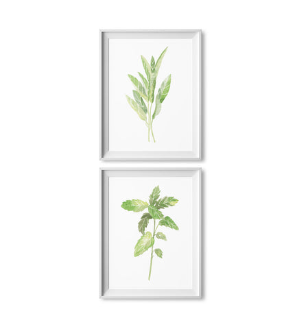 Sage & Mint Watercolor Herb Prints: Two Pack