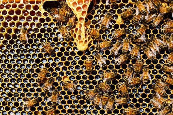 bee hive honey workers