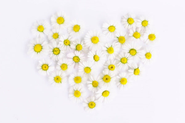 heart made of while daisys