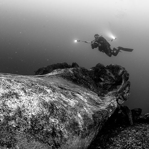 underwater whale carcass