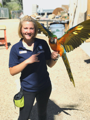 student with catalina macaw