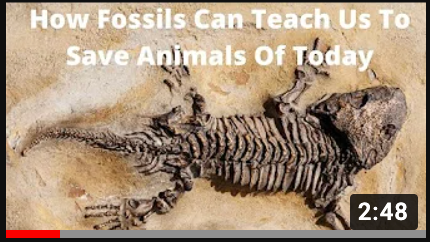 fossil video YouTube thumbnail