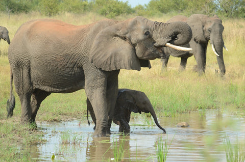mom and baby elephant drinking water at watering hole
