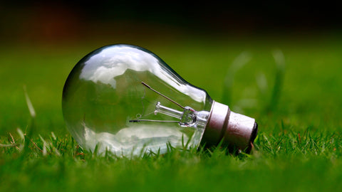 light bulb grass green