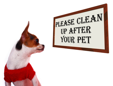 clean up after pet