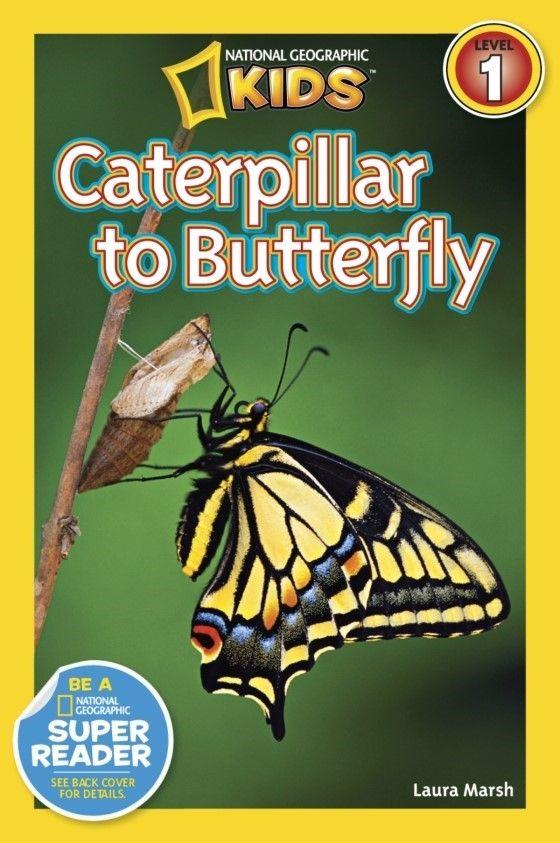 National Geographic Kids Readers: Caterpillar to Butterfly (Level 1) Animal Book