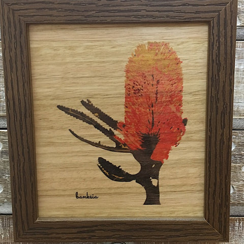 AUSTRALIAN MADE COLOURED BANKSIA FRAMED