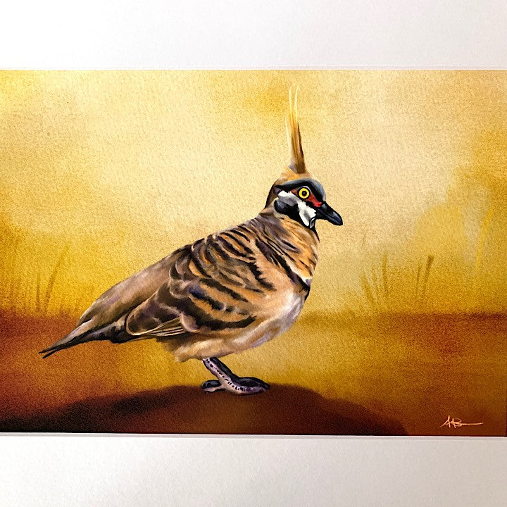 ANDI-CLAIRE PEGLER PRINT SPINIFEX PIGEON
