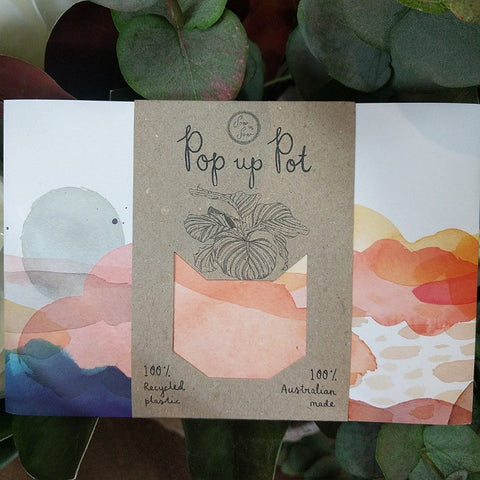 ECO POP UP POT