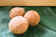 Brown Coconut (Nariyal) with Top Hair 1 piece  ココナッツ 1個