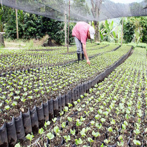 Wowe LifeStyle Gives Back Honduras One Tree Planted