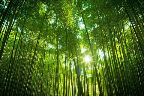 What Makes Bamboo So Special