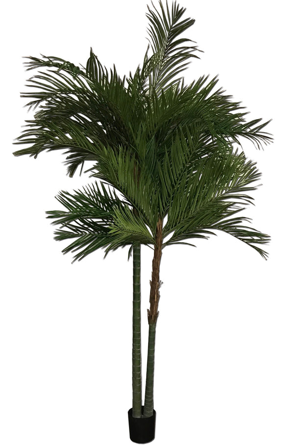Double Headed Palm Tree