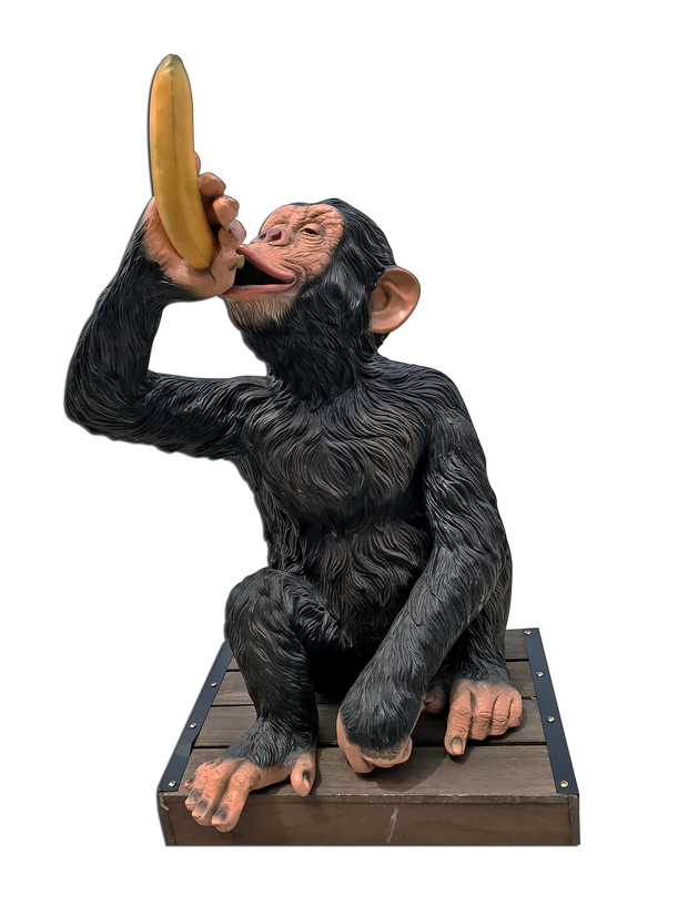 Safari Monkey