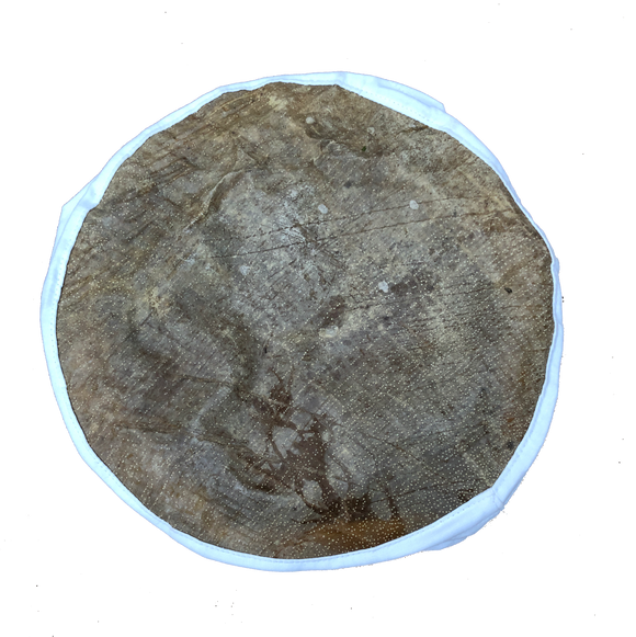 Fish Skin Drum Head, 10""