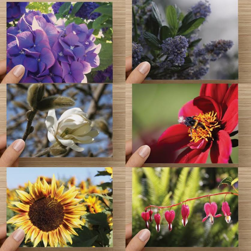 Beautiful Floral Theme Greeting Card Set of 6 - High Tide Pictures & Gifts