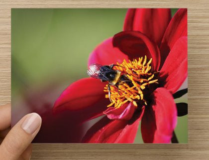 A Buzz in the Garden Blank Greeting Card - High Tide Pictures & Gifts