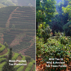 Where your tea comes from?