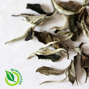 Great Debates of Tea: Is Moonlight White Tea Puer Tea or White Tea?