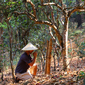 Journey To Jingmai: How I Met the Bulang Protector of Ancient Tea Forests