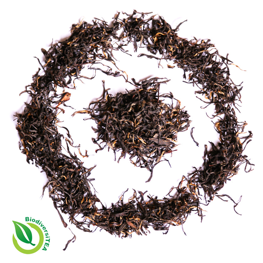 Wild Lapsang Souchong Black Tea - Wild Tea Qi Official Website