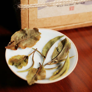 Ancient Artisan Moonlight White Tea - Wild Tea Qi Official Website