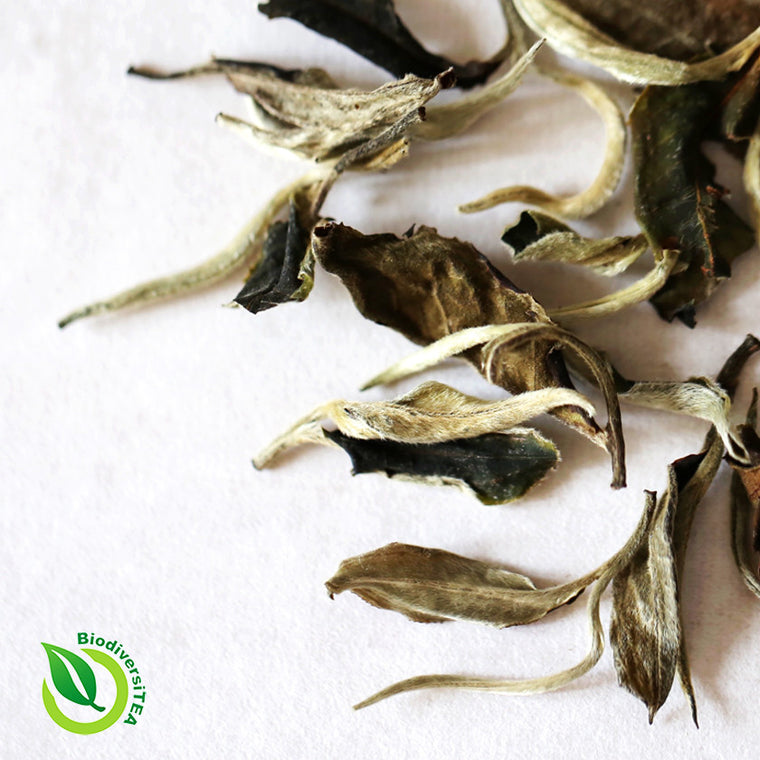 Ancient Artisan Moonlight White Tea