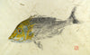 Golden Trevally Juvenile Print