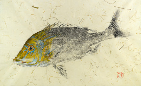 Black Bream Print