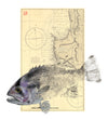 Barramundi Full Colour Print