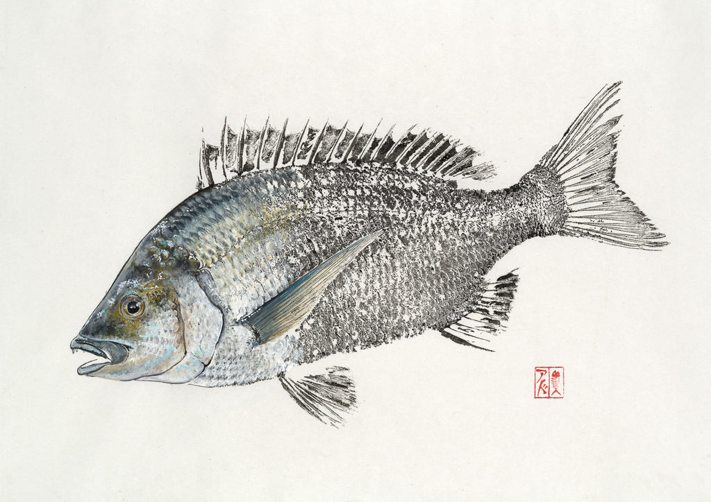 Black Bream Original