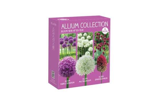 "Kit de bulbes ""d'Allium"""