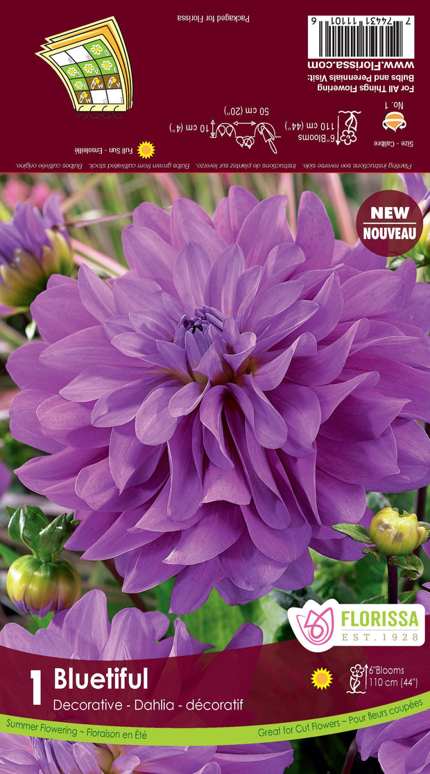 "Bulbe de ""Dahlia Bluetiful"""